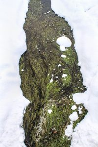 Téli zöld