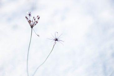 Hófehérben - Erdélyi képek