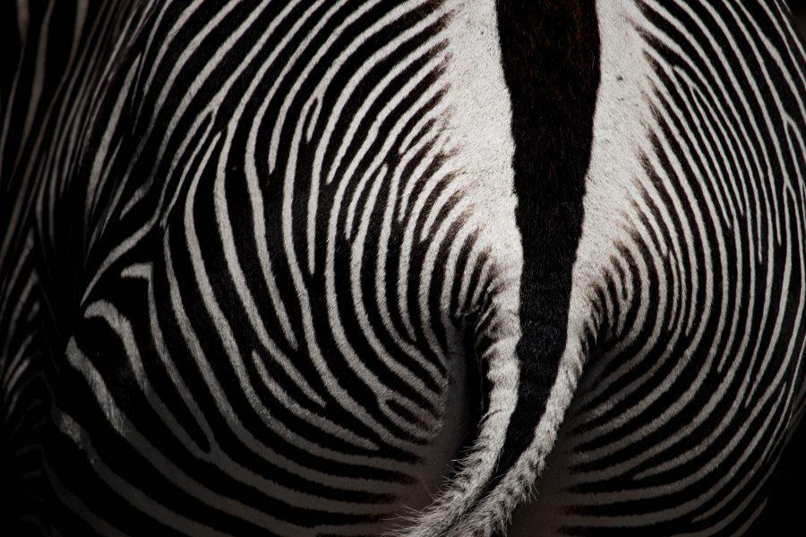 Zebra csíkok