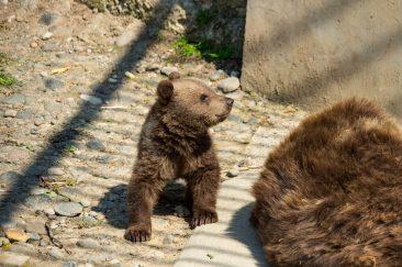 Medvék - Erdélyi képek