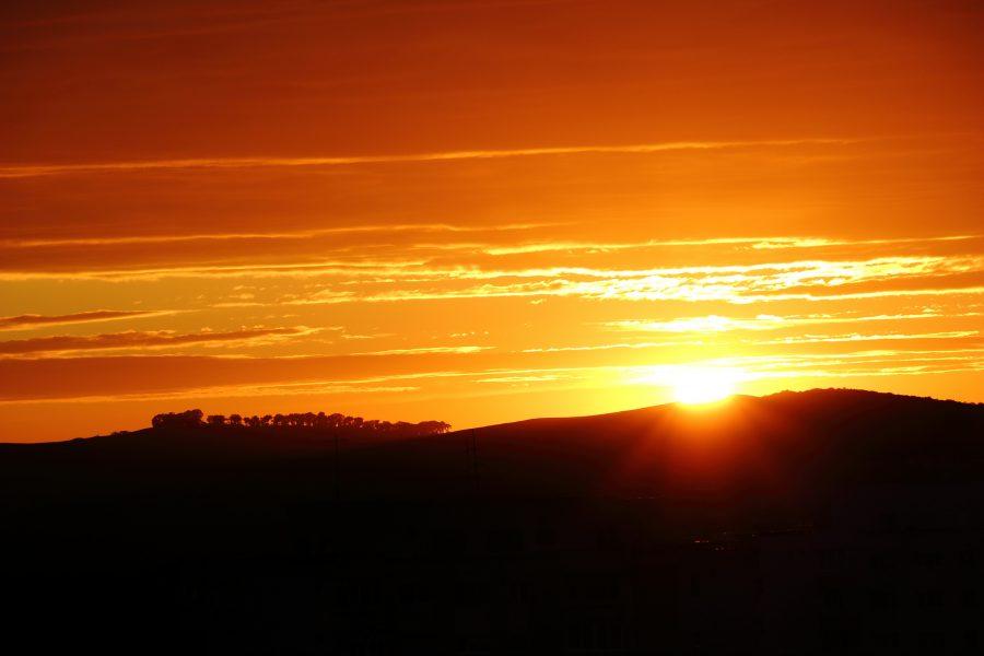 Erdő a naplementében