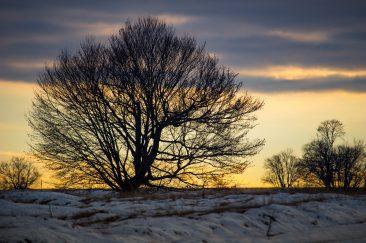 Téli sziluett - Erdélyi képek