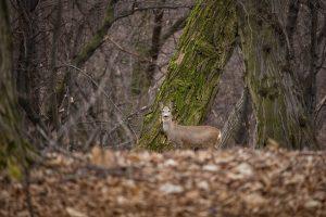 Erdőben sétálva