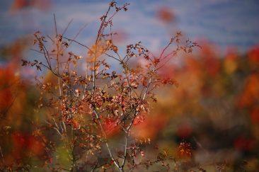 Őszi csendélet - Erdélyi képek
