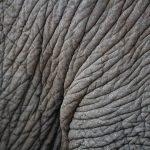 Az elefánt bőre