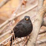 Igazi Angry bird