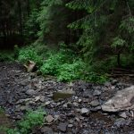 A hét forrásból eredő Nagykút pataka