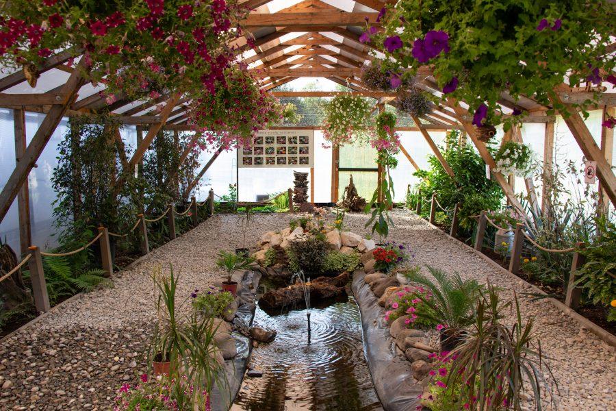 A parajdi Trópusi Lepkeház pillangós kertje