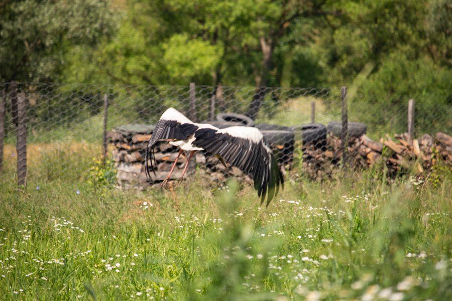 Repülő gólya