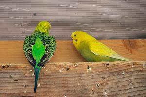 Színes madárkák a lepkeházban