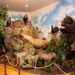 A Kárpát-medence állatai a Székelyföldi Vadászati Múzeumban