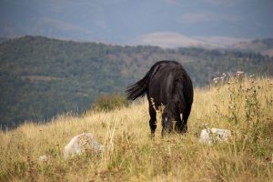 Legelő ló a Székelykő legtetején