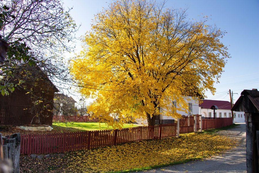 Őszi színekben pompázó fa