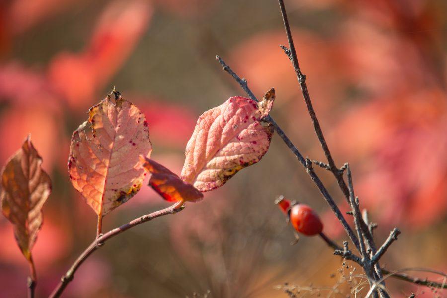 Őszi színes levelek