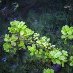 Növények a Termál-vízesés környezetében