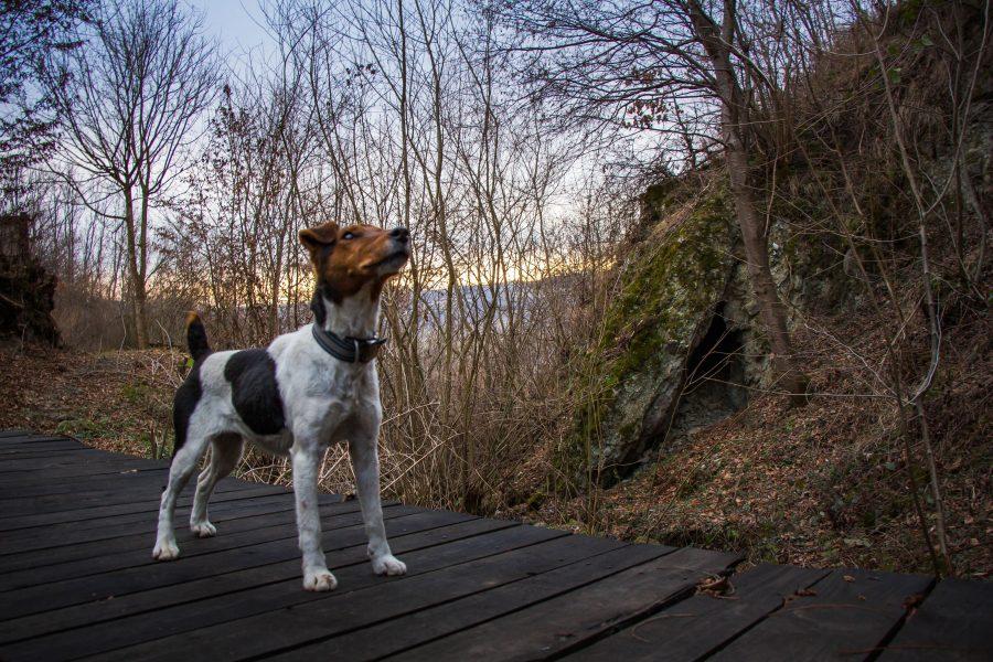 Hű útitársunk Jázmin, a kutya