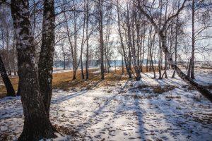 Téli ragyogás a Rétyi Nyírben