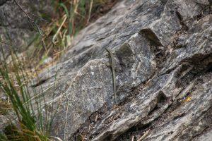 A Tordai-hasadék élővilága nagyon változatos