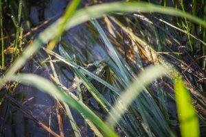 Béka lapul a vízben