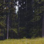 Fenyőfa háttérkép is lehetne