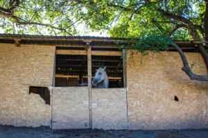 Ló a természetben