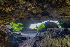 A fatörzsbarlangok élővilága
