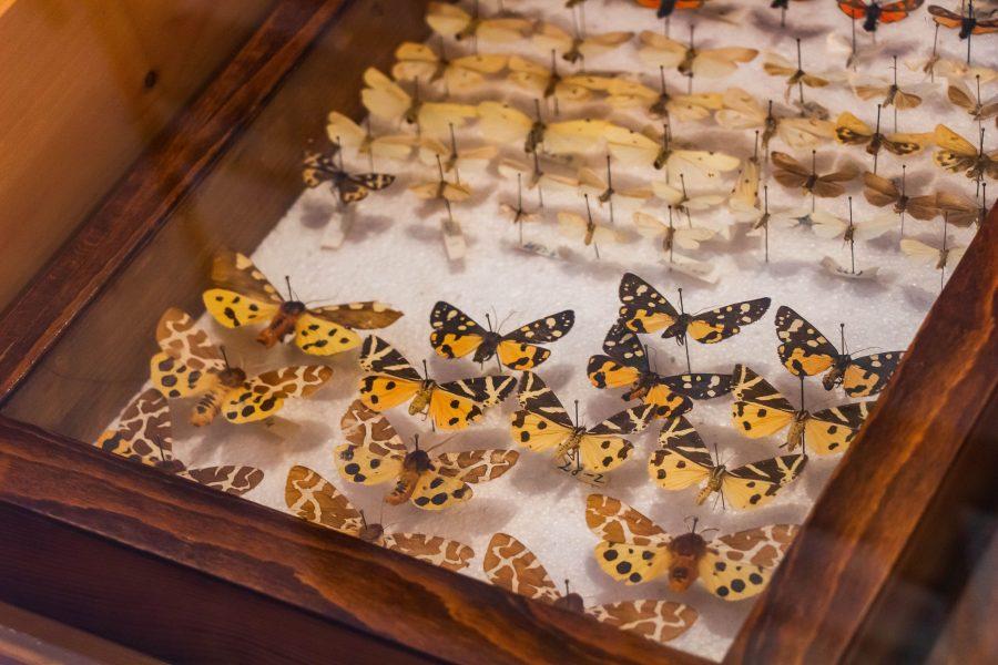 A pillangó minták szépsége