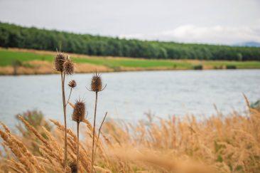 A Sepsikőröspataki-tó - Erdélyi képek