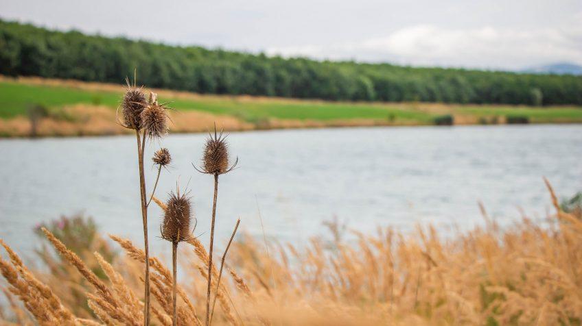 A Sepsikőröspataki-tó