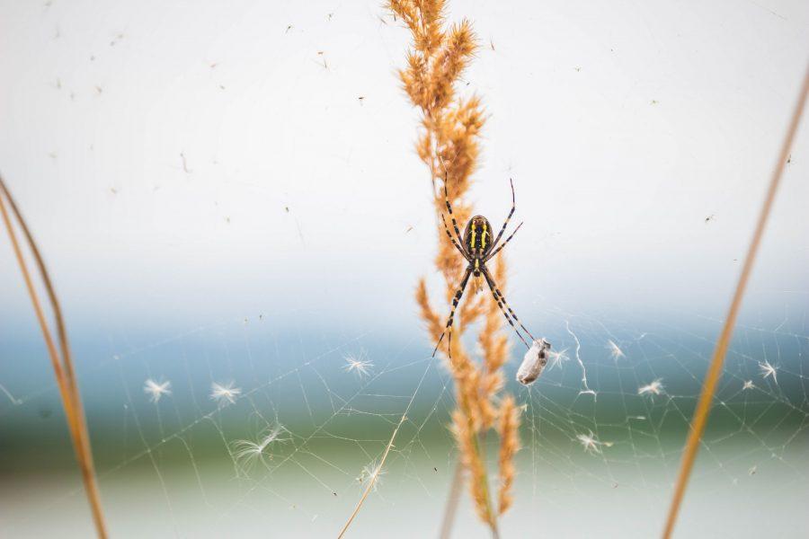 Pók a természetben