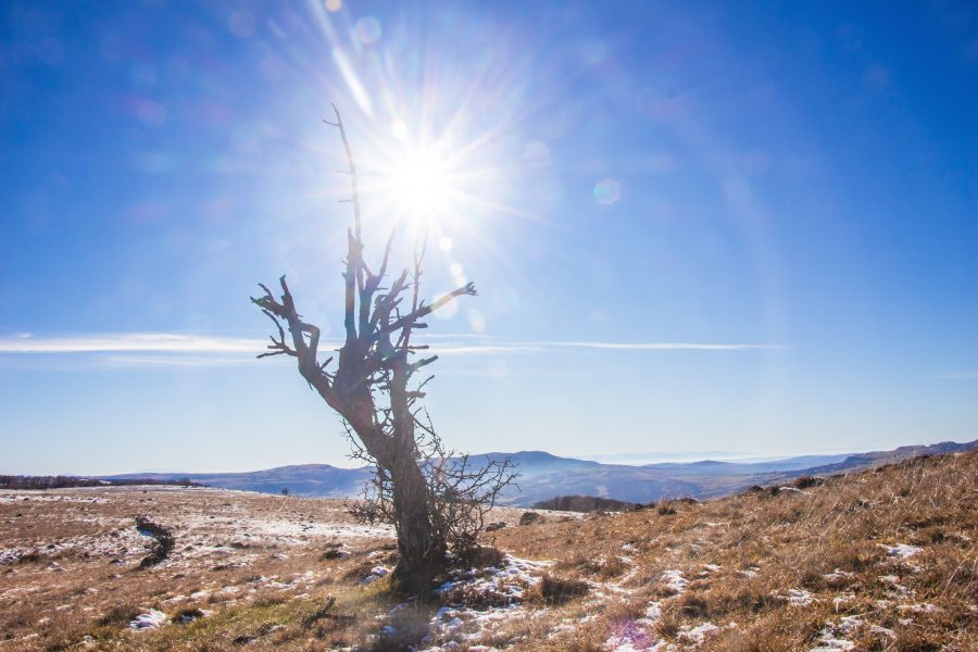Ragyogó napfény télen