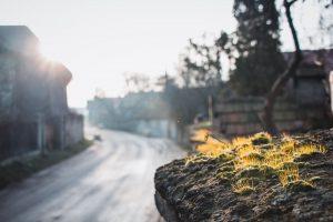 Élet a kőfalon