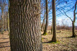 Tavasz, napfény, erdő...