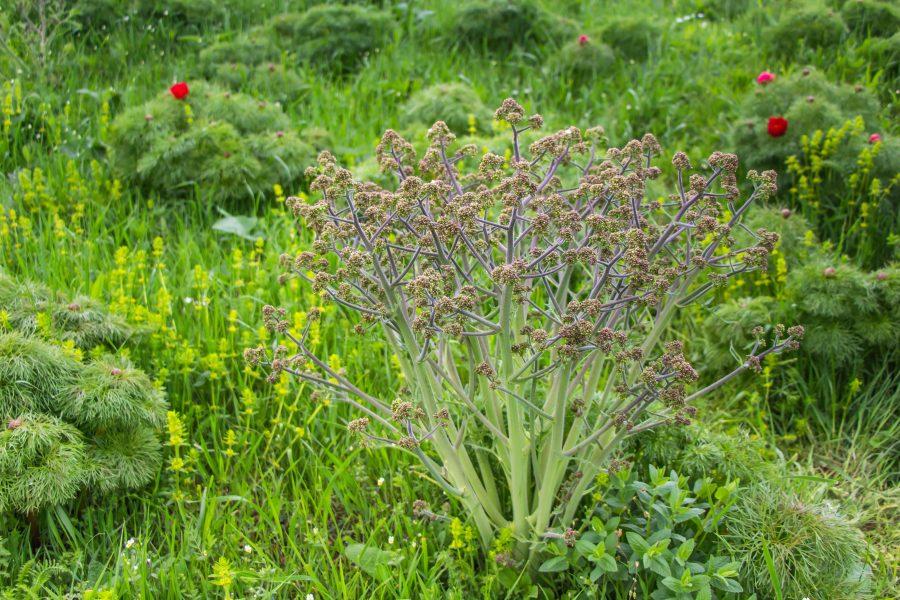 Közel 300 fajta növény él a mezőzáhi Bazsarózsa rezervátumban