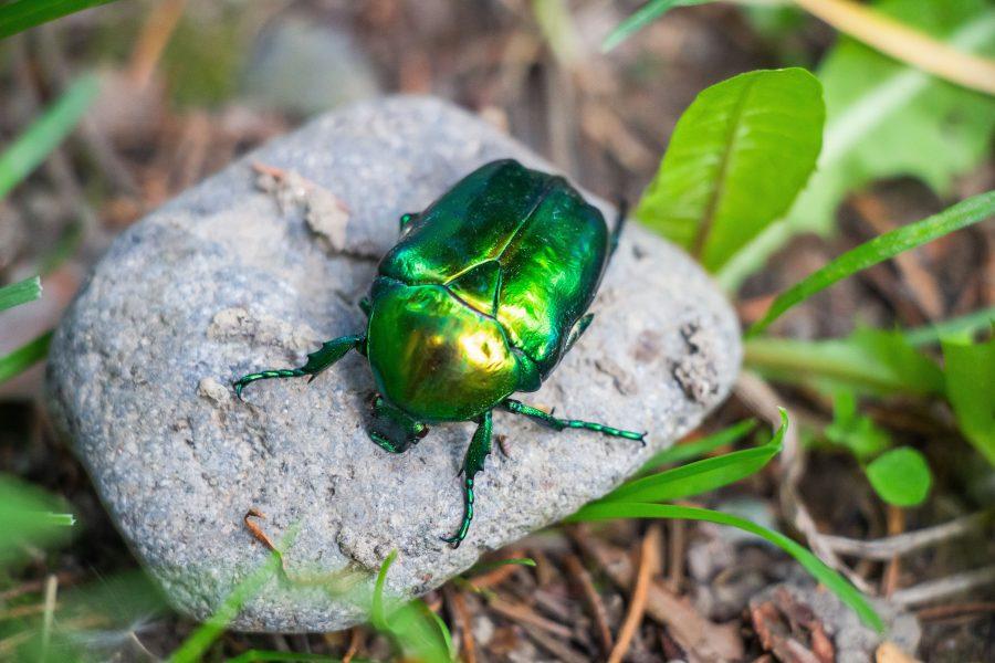 A bogarak is szeretik az ásványvizet