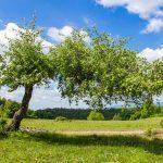 Vízszintesen növekvő fa
